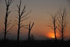 Cuatro árboles Imagen de archivo