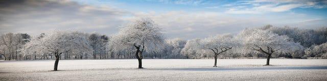 Cuatro árboles congelados Imagen de archivo libre de regalías