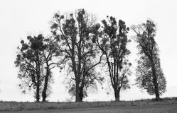 Cuatro árboles gráficos Fotos de archivo libres de regalías
