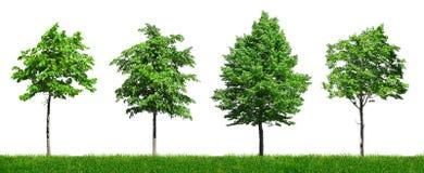 Cuatro árboles verdes jovenes Imágenes de archivo libres de regalías