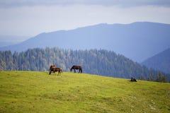 Cuatro caballos Foto de archivo libre de regalías