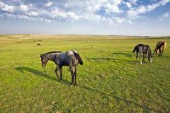 Cuatro caballos Fotografía de archivo