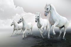 Cuatro caballos blancos Foto de archivo libre de regalías