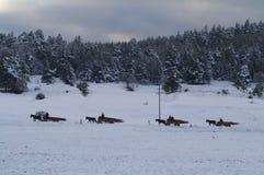 Cuatro caballos, cuatro carros y un bosque Foto de archivo