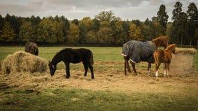 Cuatro caballos en campo Imagen de archivo
