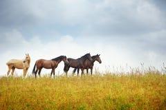 Cuatro caballos en la estepa Fotos de archivo libres de regalías