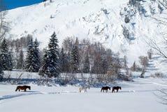 Cuatro caballos salen del bosque congelado foto de archivo