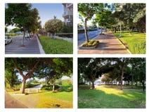 Cuatro callejones de árboles Imagen de archivo libre de regalías