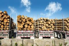Cuatro camiones que transportan registros Foto de archivo
