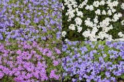 Cuatro campos de flor Fotografía de archivo libre de regalías