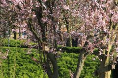 Cuatro casas del pájaro en el tronco del árbol con el flor rosado Fotos de archivo