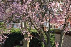 Cuatro casas del pájaro en el tronco del árbol con el flor rosado Imágenes de archivo libres de regalías