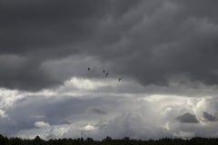 Cuatro cigüeñas y x28 que vuelan; ciconia y x29; en fondo del cielo nublado imagenes de archivo