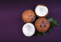 Cuatro cocos saludables se agrietaron en medio y entero en las hojas de un verde y en un fondo púrpura oscuro Fruta orgánica nutr Fotografía de archivo