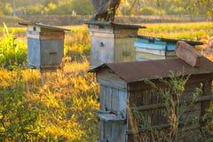 Cuatro colmenas rurales en el entorno natural Fotografía de archivo
