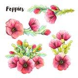 Cuatro composiciones de las amapolas rojas de la acuarela, brotes, hojas Imagen de archivo libre de regalías
