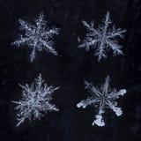 Cuatro copos de nieve reales aislados Foto de archivo libre de regalías