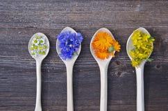 Cuatro cucharas de madera con las diversas flores médicas Imágenes de archivo libres de regalías