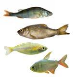 Cuatro diversos pescados imagen de archivo