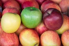 Cuatro diversos tipos de manzanas maduras Imágenes de archivo libres de regalías