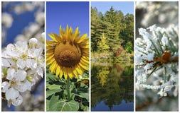 Cuatro estaciones Imagen de archivo libre de regalías