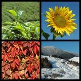 Cuatro estaciones - collage de la naturaleza Imágenes de archivo libres de regalías