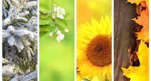 Cuatro estaciones del año Fotos de archivo libres de regalías