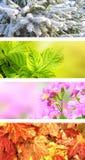 Cuatro estaciones del año Imágenes de archivo libres de regalías