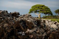 Cuatro estaciones, Hawaii, isla grande, los E.E.U.U. La visión perfecta imagenes de archivo