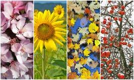 Cuatro estaciones. Resorte, verano, otoño, invierno. Imágenes de archivo libres de regalías