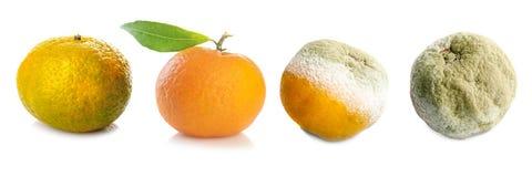 Cuatro etapas de mandarina imagen de archivo libre de regalías