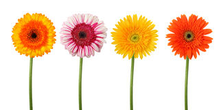 Cuatro flores aisladas - camino de recortes Imagen de archivo libre de regalías
