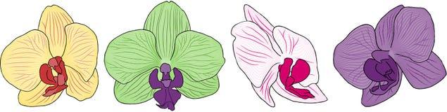 Cuatro flores de la orquídea Foto de archivo libre de regalías