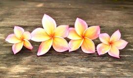 Cuatro flores del plumeria Fotografía de archivo libre de regalías