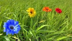 Cuatro flores en prado Fotos de archivo libres de regalías