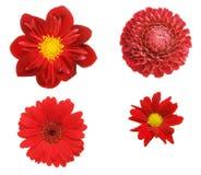 Cuatro flores rojas fotografía de archivo