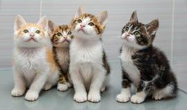 Cuatro gatitos Imagen de archivo libre de regalías