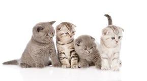 Cuatro gatitos del bebé en frente Aislado en el fondo blanco Fotos de archivo