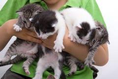 Cuatro gatitos sostenidos por Child Foto de archivo libre de regalías
