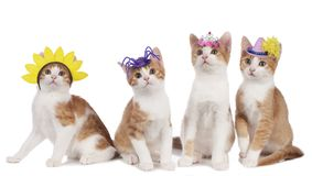 Cuatro gatos divertidos con los sombreros del carnaval Fotos de archivo
