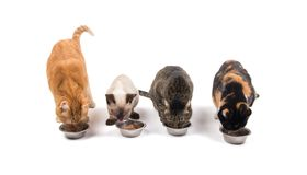 Cuatro gatos en diversos colores y tamaños que comen fuera de los cuencos Fotografía de archivo libre de regalías