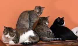 Cuatro gatos junto Imágenes de archivo libres de regalías