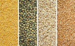 Cuatro granos secados Fotos de archivo