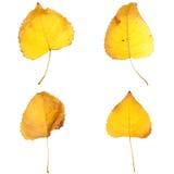 Cuatro hojas de la caída Fotos de archivo libres de regalías
