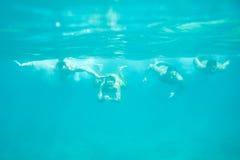 Cuatro hombres que nadan bajo el agua Fotografía de archivo libre de regalías