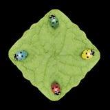 Cuatro laydybugs Fotografía de archivo libre de regalías