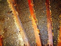 Cuatro manijas de miel selladas Fotografía de archivo