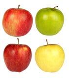 Cuatro manzanas en un fondo blanco Imágenes de archivo libres de regalías