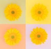 Cuatro margaritas amarillas en cuadrados en colores pastel Imagen de archivo libre de regalías