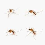 Cuatro mosquitos fotos de archivo